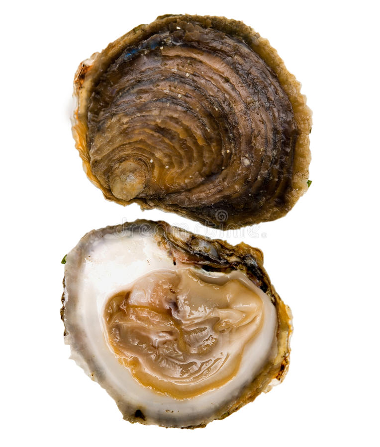 Download Oysters Belon Stock Images - Image: 11043114