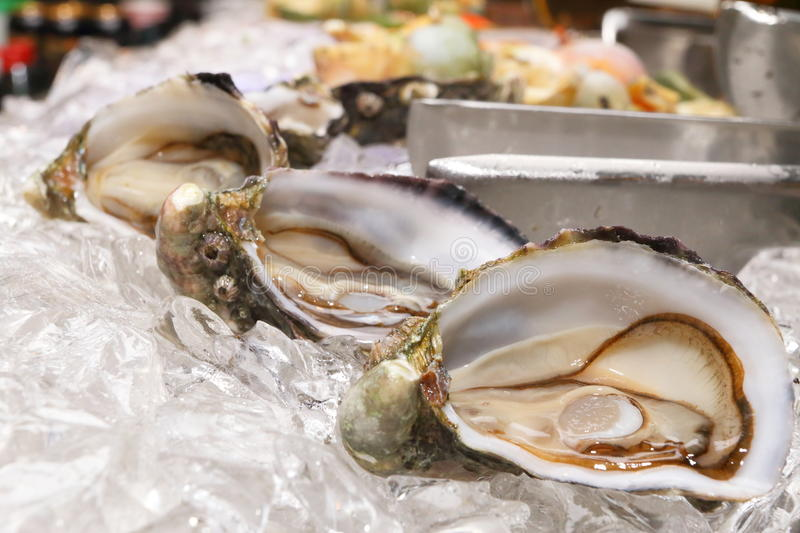 Oysters royalty free stock photo