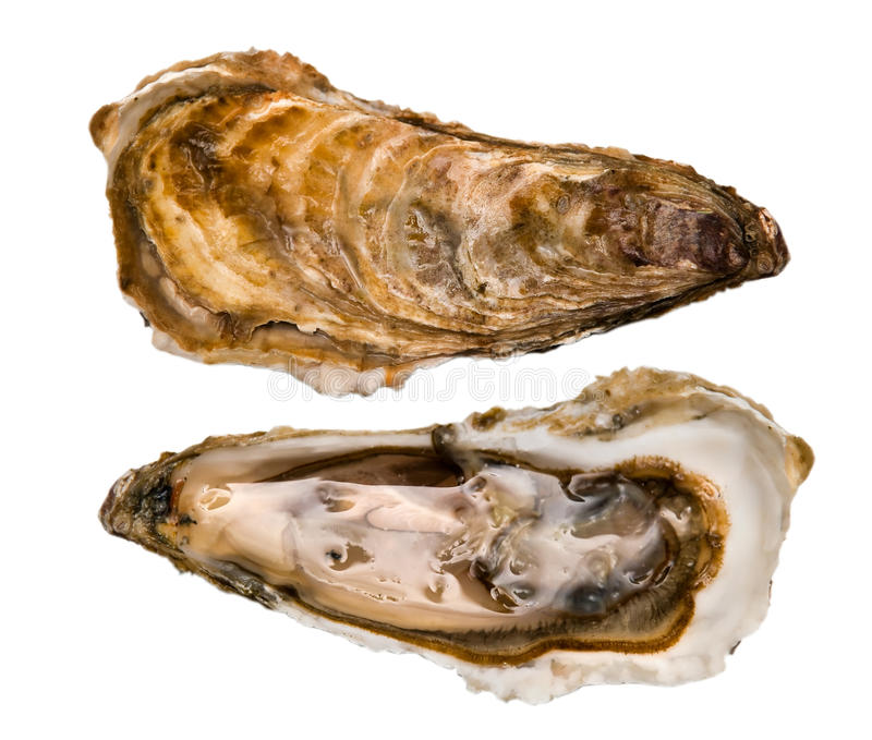 Oysters, four seasons