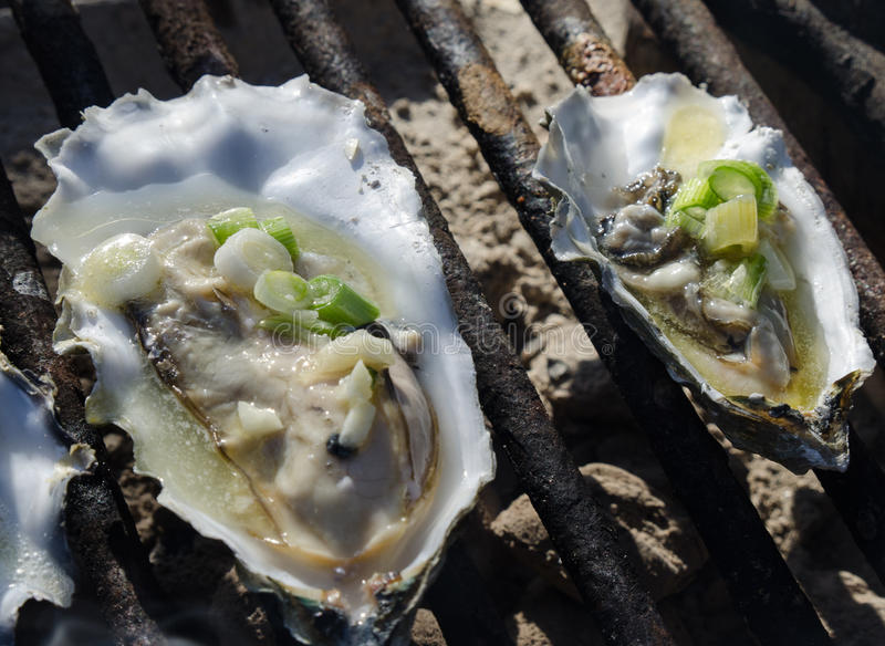 Download Oysters on the grill stock photo. Image of park, seafood - 37952066