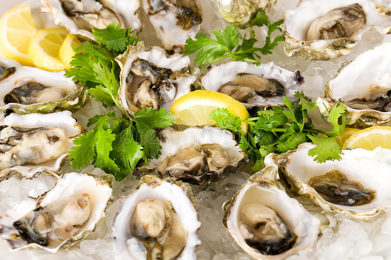 Oysters on the Half Shell royalty free stock photos