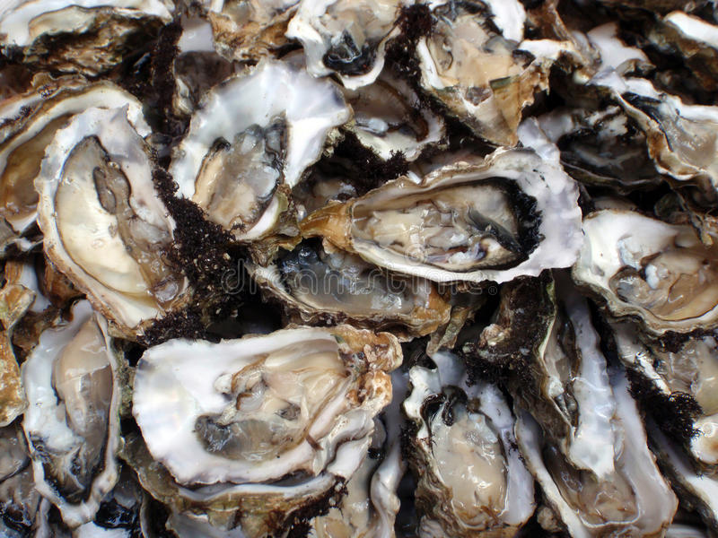 Oysters, half shells, close-up stock photos