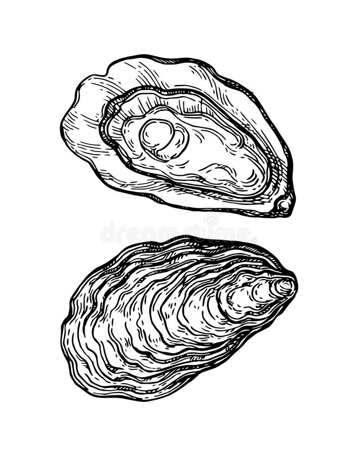 Oysters ink sketch. On white background. Hand drawn vector illustration. Retro style stock illustration