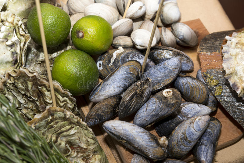 oysters, mussels, shellfish, lime, food stock image