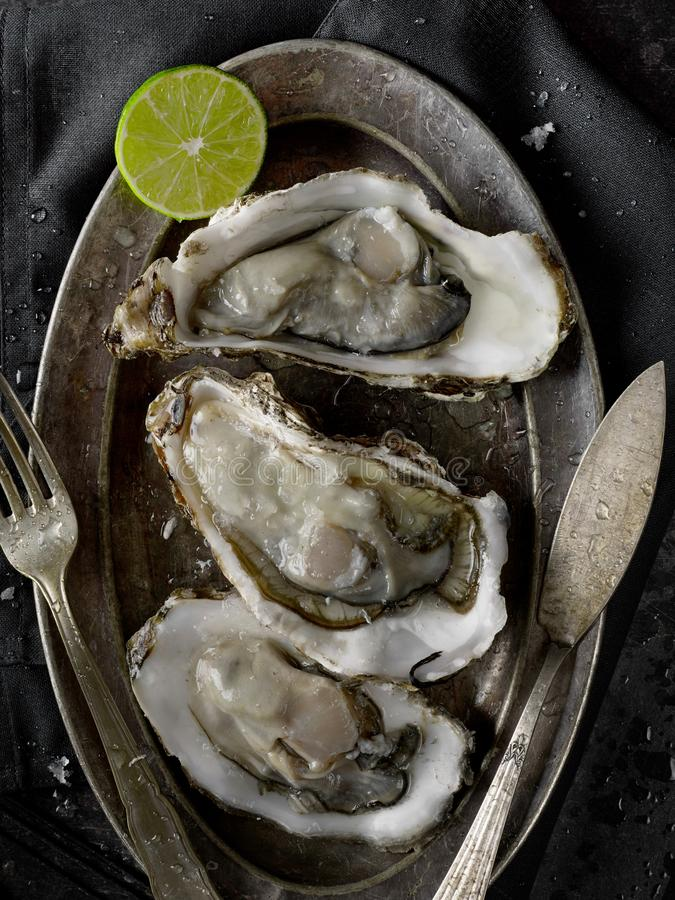 Oysters on plate royalty free stock images