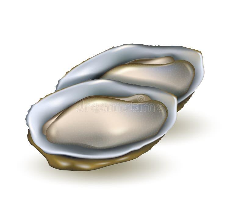 Oysters realistische Vektorgrafik Seeohrprodukt isoliert lizenzfreie abbildung