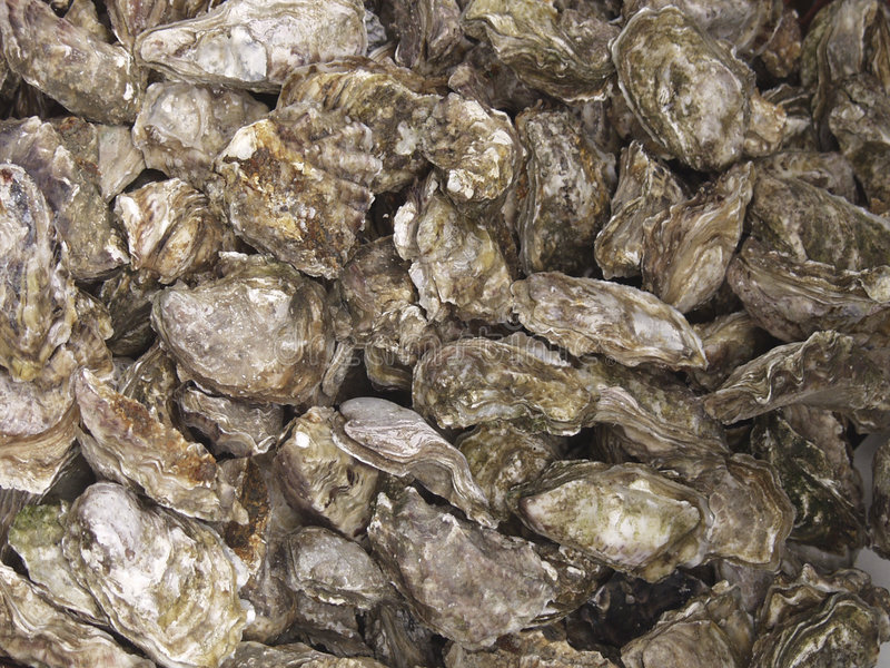 Download Oysters for sale sea food stock image. Image of shore - 1405521