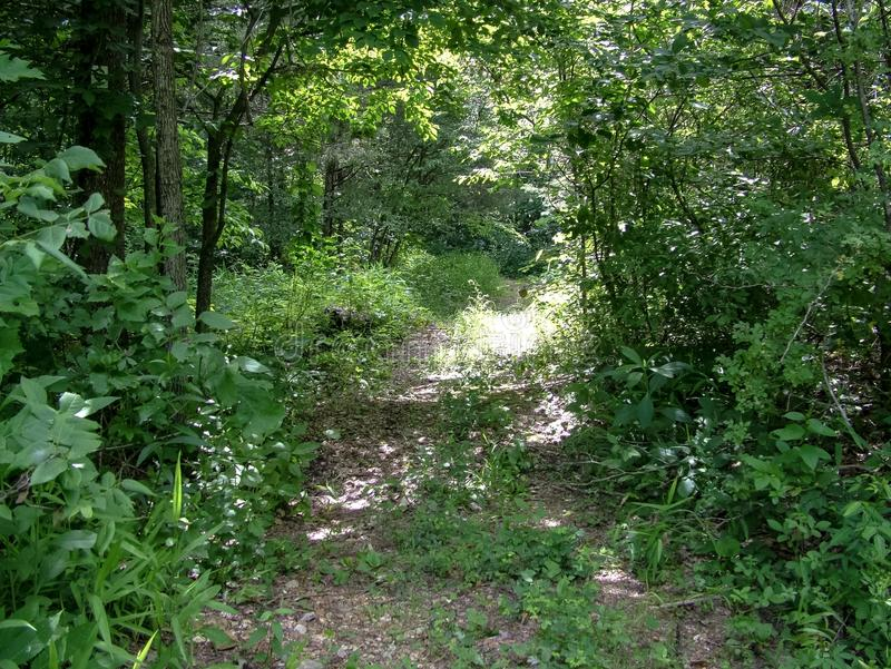 Ozark Trail Blair Creek. A overgrown section of the Ozark Trail Blair Creek section hikes on June 2014 stock image