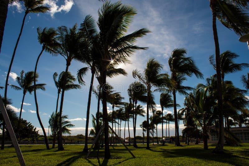 In Ozean-Antrieb schlendern, Südstrand, Miami; Palmen und hellgrüner Rasen; windiger Tag stockfoto