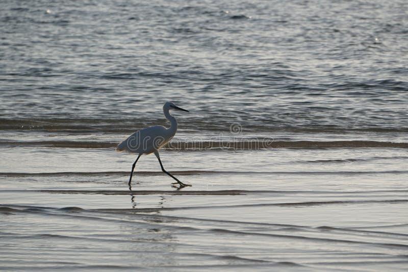 Ozean atlantisch Magiewellen, die auf dem Strandsand laufen stockfotografie