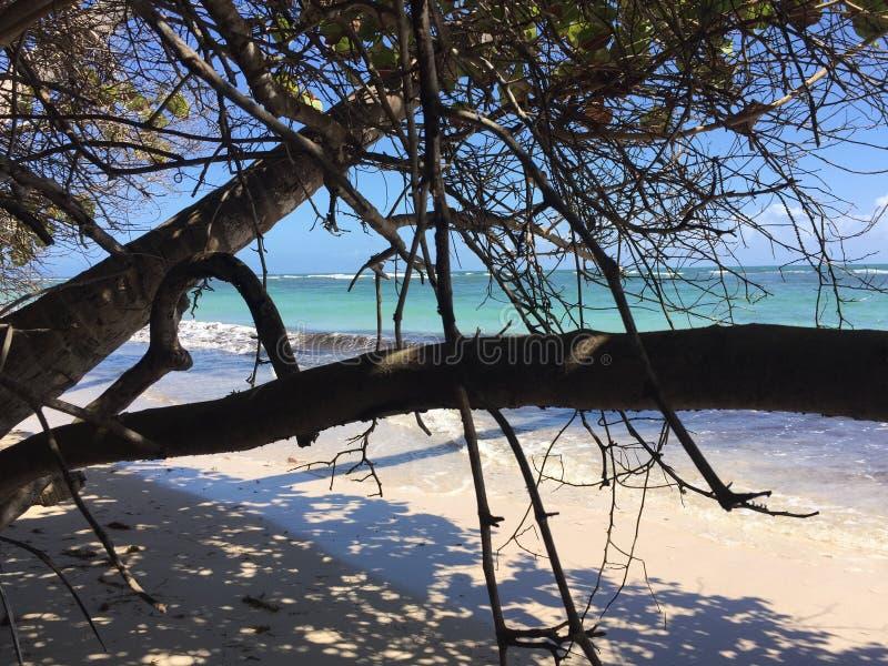 Ozean durch Bäume stockfotos