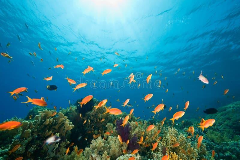Ozean, Koralle und Fische stockfotos