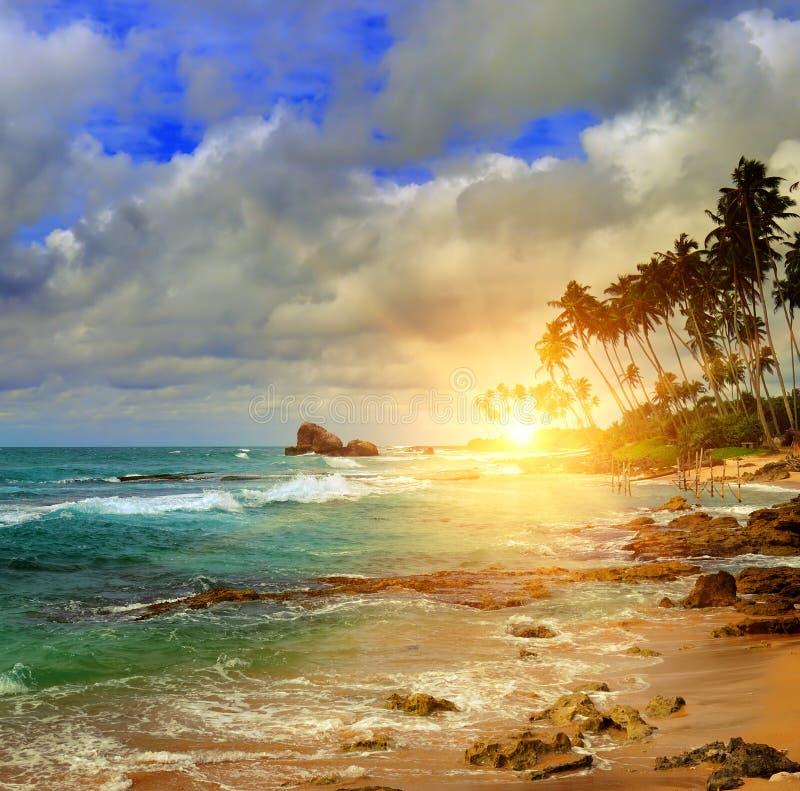 Ozean, Sonnenaufgang und tropische Palme lizenzfreies stockfoto