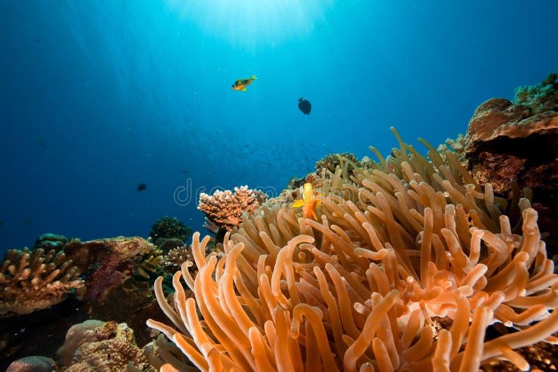 Ozean und Anemone lizenzfreie stockfotos