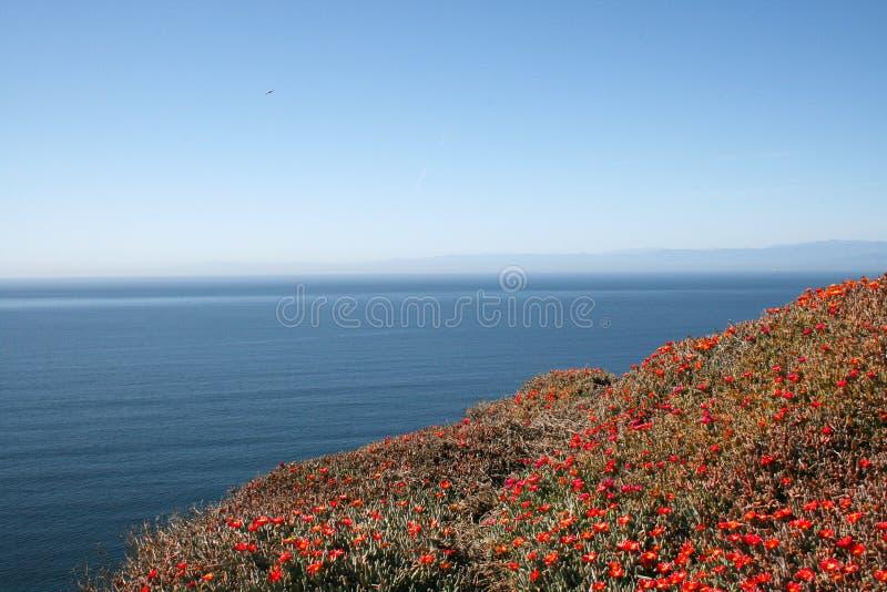 Ozean und Blumen stockfoto
