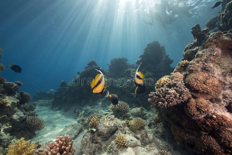 Ozean und Fische stockfoto
