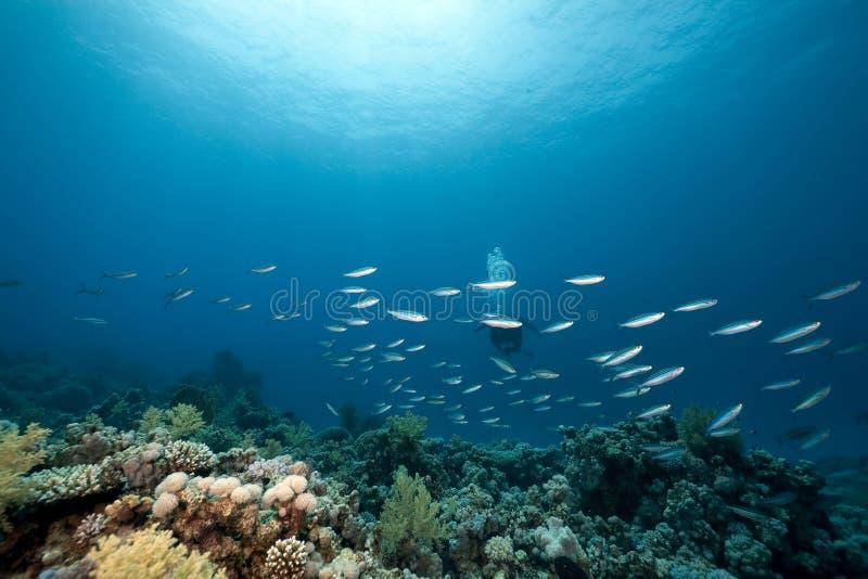 Ozean und Fische lizenzfreie stockfotos