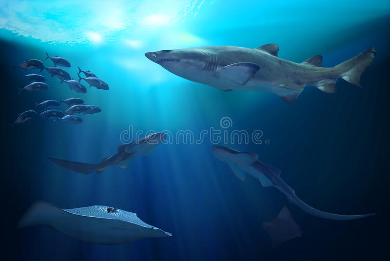 Ozean Unterwasser Abbildung 3D vektor abbildung