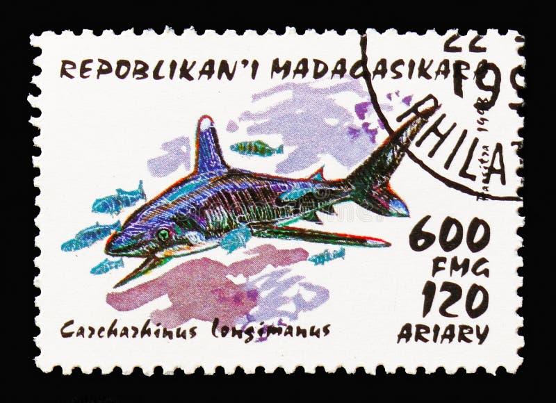 Ozeanischer Whitetip-Haifisch (Carcharhinus longimanus), Haifische serie, circa 1993 stockfotos