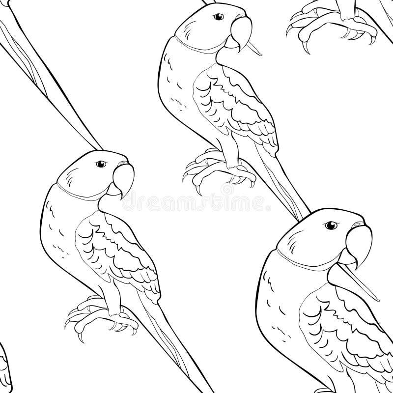 Ozherelovy papegoja för sömlös papegoja för modellfärgläggning indisk ringed royaltyfri illustrationer