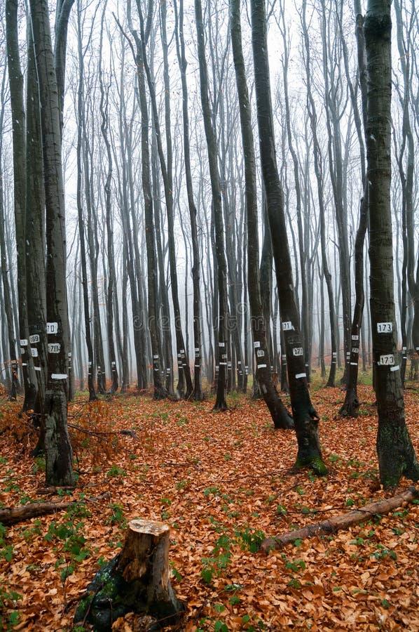 Oznaczający drzewa Drewniany przemysł i wyróbka fotografia royalty free