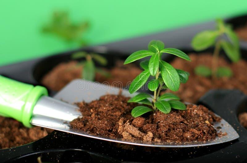 Pá com solo e planta. imagem de stock royalty free