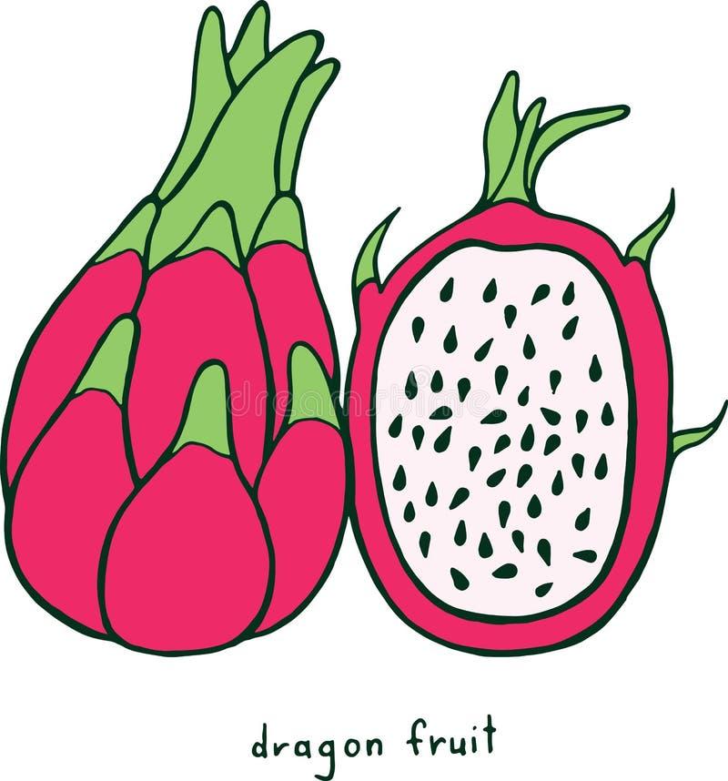 Página del colorante de la fruta del dragón Arte colorido f del garabato del vector gráfico stock de ilustración