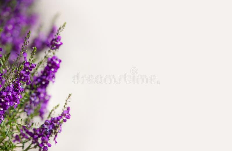 Página púrpura de la frontera de la flor imagen de archivo libre de regalías
