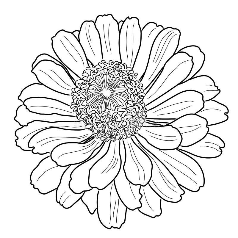 Página que colorea de la flor del Zinnia stock de ilustración