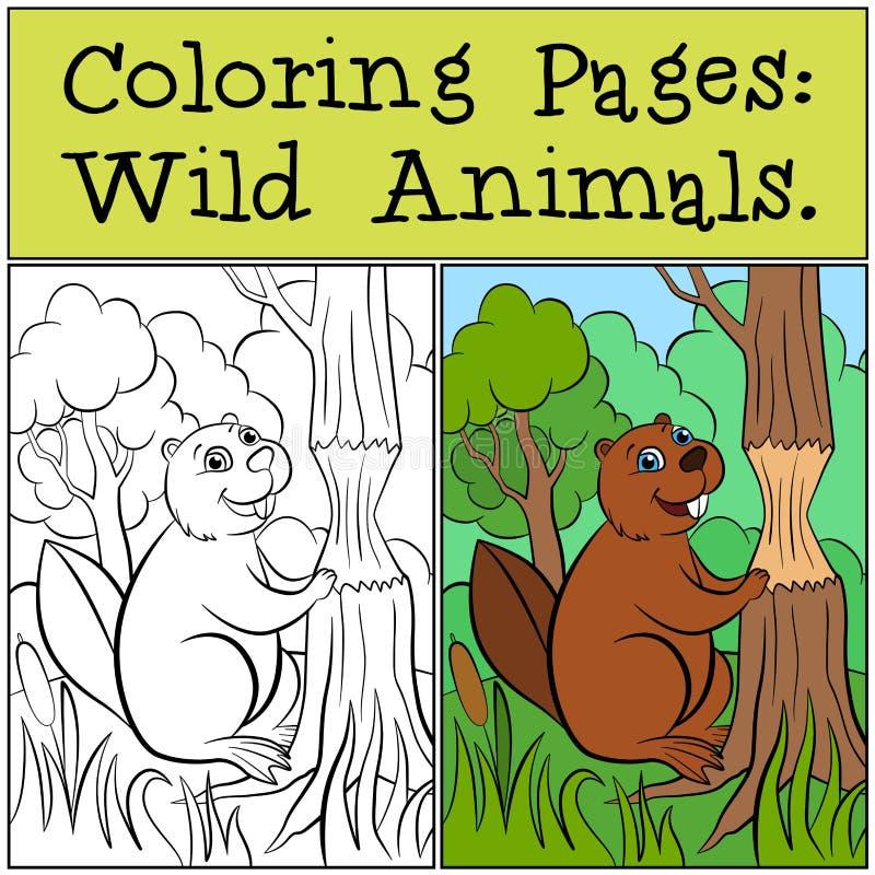 Páginas da coloração: Animais selvagens Castor bonito pequeno ilustração do vetor