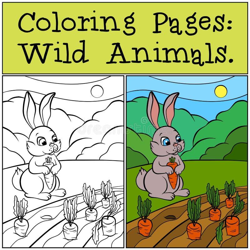 Páginas da coloração: Animais selvagens Coelho bonito pequeno ilustração stock