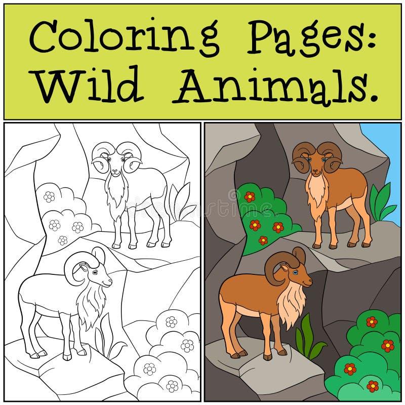 Páginas da coloração: Animais selvagens Dois urials bonitos na montanha ilustração royalty free