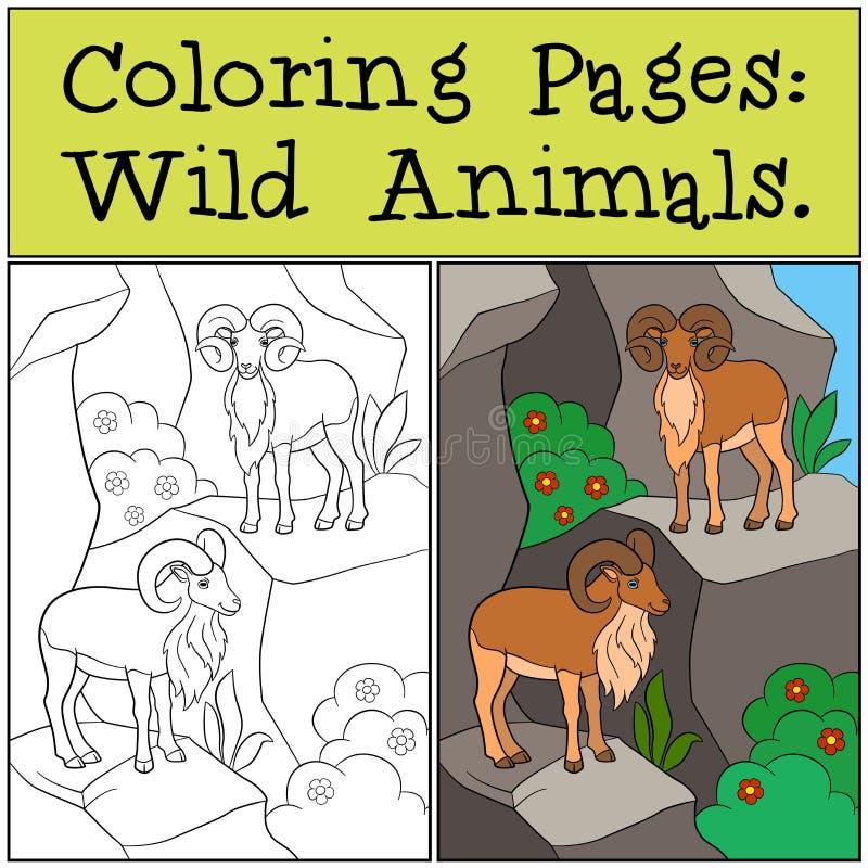 Páginas da coloração: Animais selvagens Dois urials bonitos na montanha ilustração do vetor