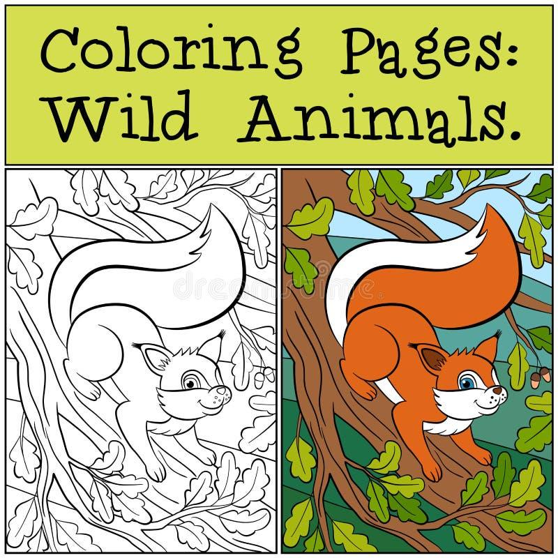 Páginas da coloração: Animais selvagens Esquilo bonito pequeno ilustração royalty free