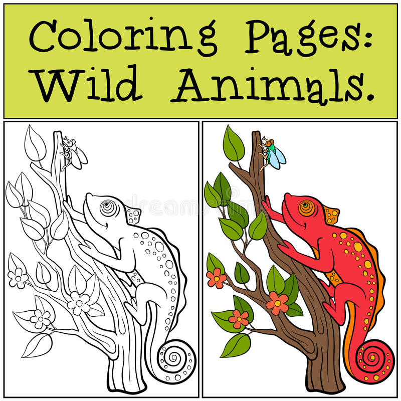 Páginas Del Colorante: Animales Salvajes Pequeño Camaleón Rojo Lindo ...