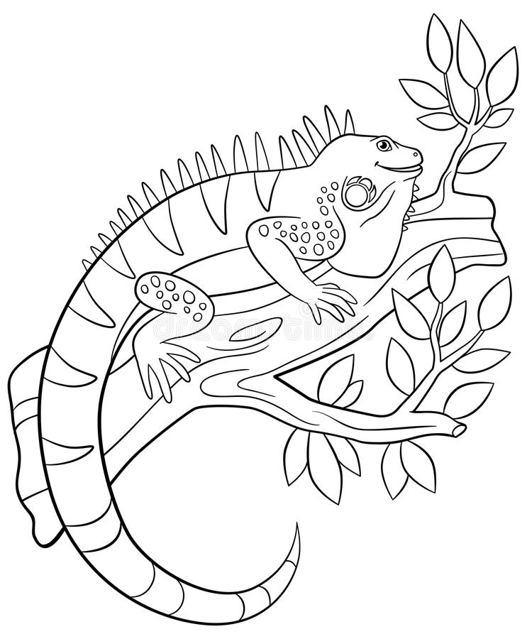Páginas del colorante La iguana linda se sienta en la rama de árbol stock de ilustración