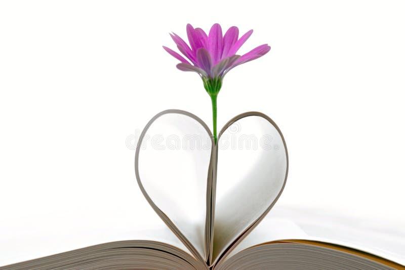 Páginas púrpuras de la flor y del libro imagen de archivo libre de regalías