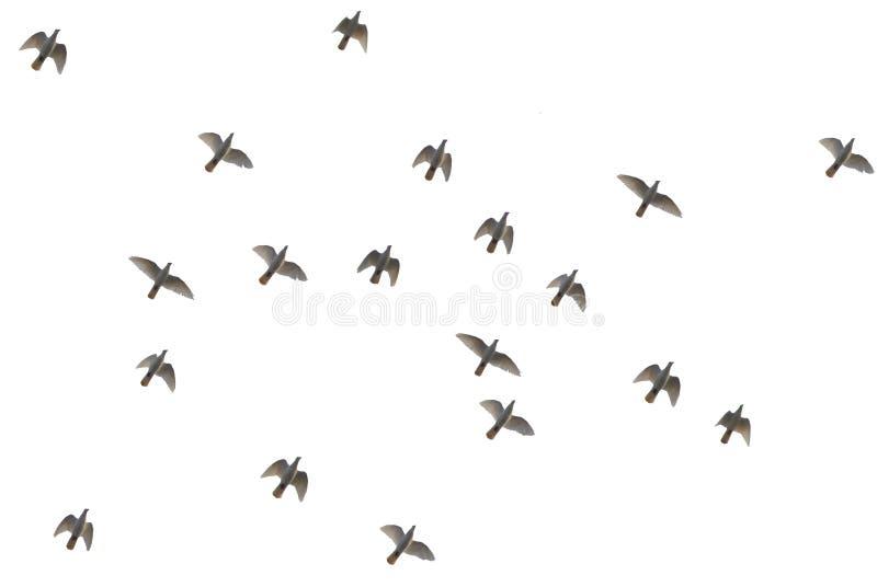 Pájaro. Foto de archivo libre de regalías