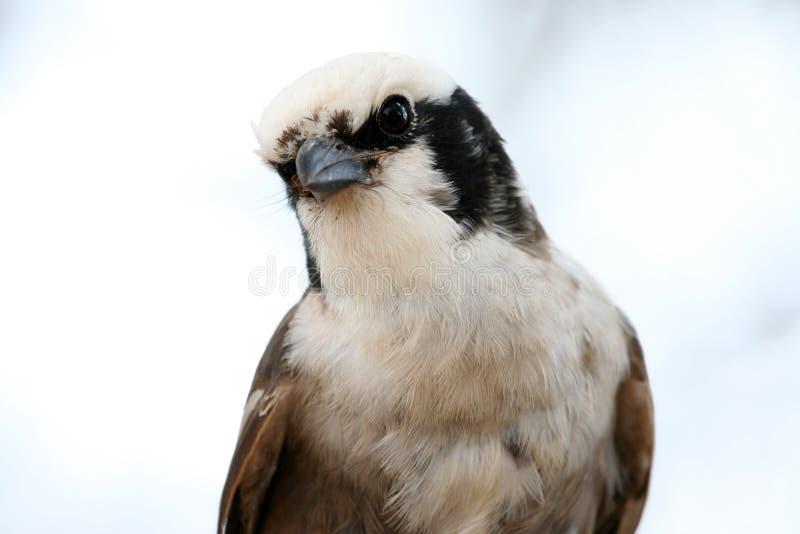 Pájaro africano imágenes de archivo libres de regalías