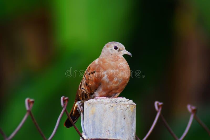 Pájaro asombroso foto de archivo libre de regalías