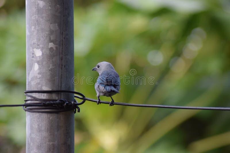 Pájaro asombroso imagen de archivo