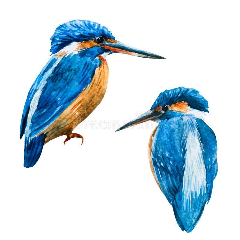 Pájaro azul del martín pescador del vector de la acuarela libre illustration