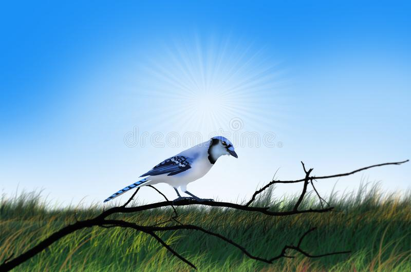 Pájaro azul en la rama debajo del cielo de la tarde libre illustration