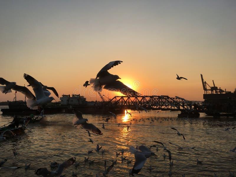 Pájaro bajo sistema del sol imágenes de archivo libres de regalías