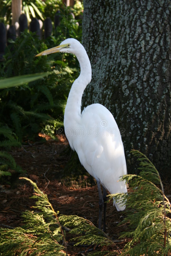 Pájaro blanco entre las plantas imagenes de archivo
