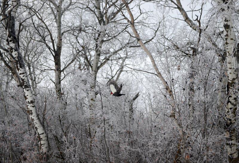 Pájaro carpintero imagen de archivo libre de regalías