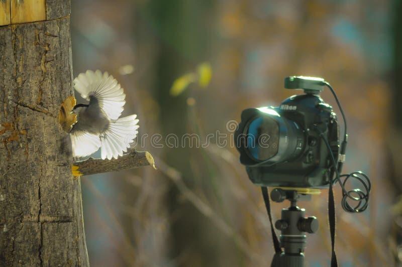 Pájaro cerca de la cámara fotografía de archivo libre de regalías