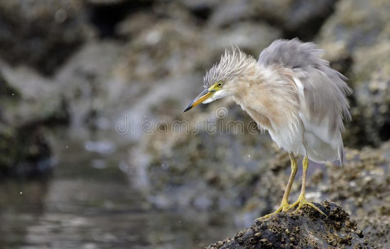 Pájaro cercano en la playa Jakarta del ancol imágenes de archivo libres de regalías