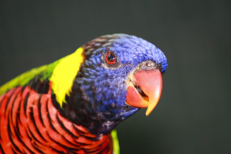 Pájaro colorido foto de archivo libre de regalías