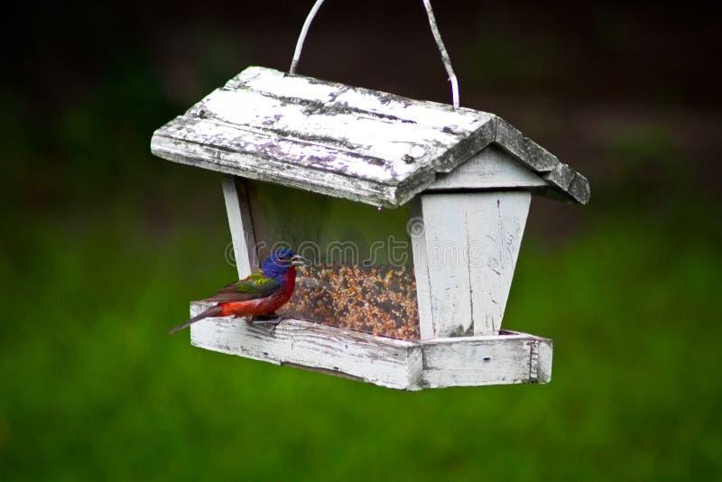 Pájaro colorido que come en el alimentador del pájaro del vintage fotos de archivo